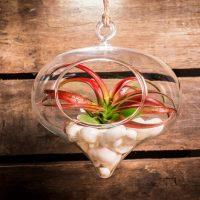 Hangende bloempot van glas: 'n UItzonderlijke eyecatcher