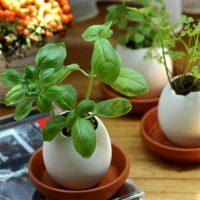 Kruidenei voor een groen paasontbijt: het gezondste paasei ooit